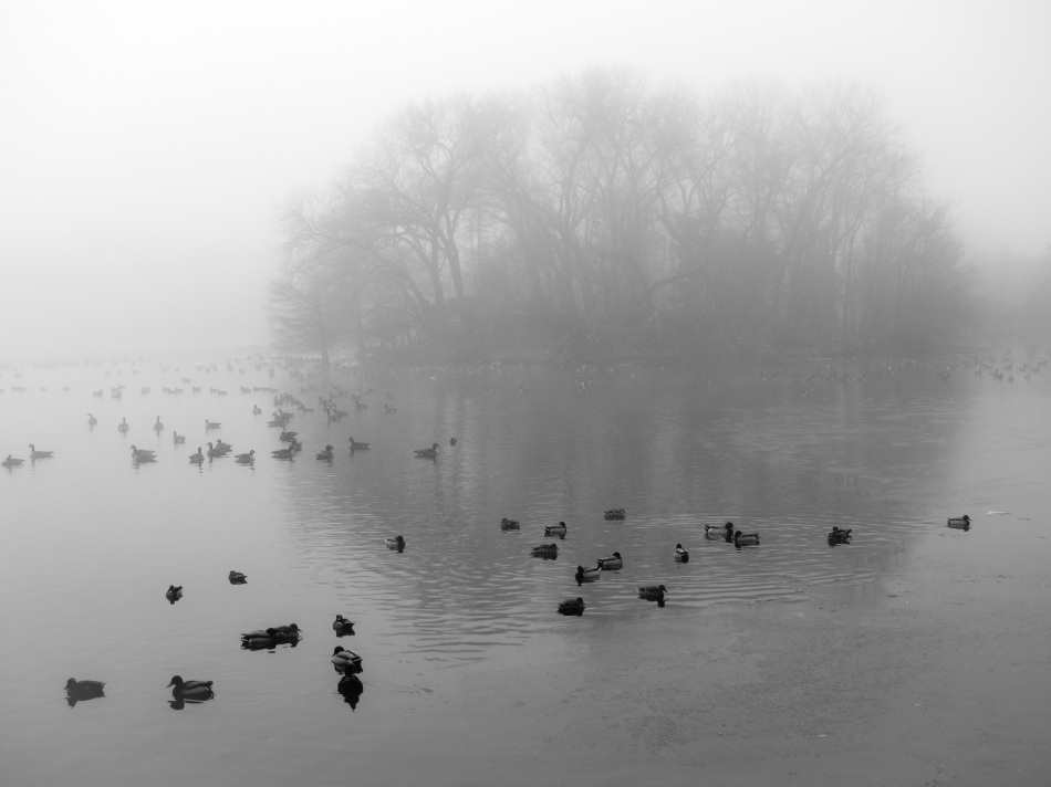 Birds On Lake In Icy Winter Fog